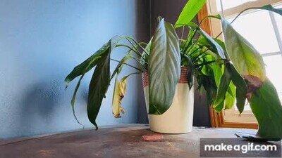Enlace a Por favor riega un poquito más las plantas de casa