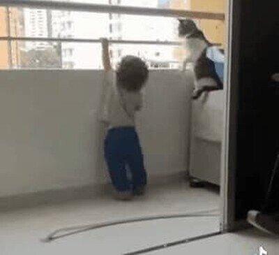 Un gato que salva la vida de un niño pequeño
