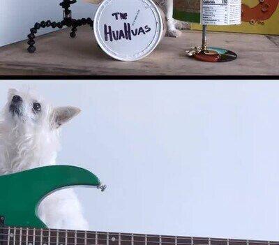 Enlace a Una banda Chihuahuas. Una pena no escuchar la música