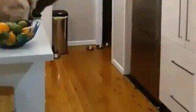 Enlace a Mola un montón ver el salto de un gato a cámara lenta