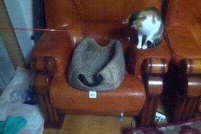 Enlace a Un gato jugando a jugar con un gato