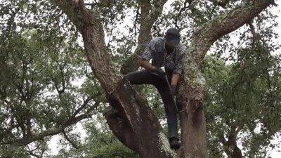 Enlace a Es imposible no sentir pena por ese pobre árbol