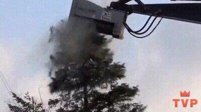 Enlace a Es imposible no sentir un poco de pena por ese pobre árbol