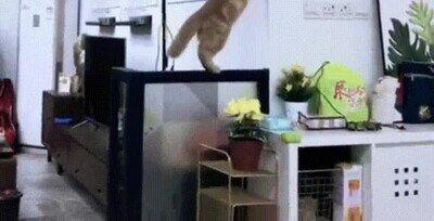 Enlace a El gato la ha tomado con el reloj de foma personal