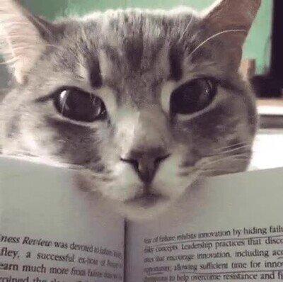 Enlace a ¿Has decidido estudiar en vez de hacerme caso?