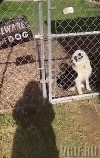 Enlace a No parece un perro muy peligroso