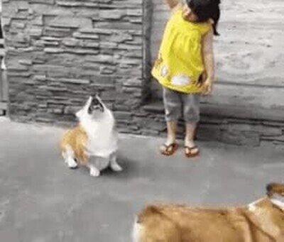 El perro ha demostrado ser más lista que la humana