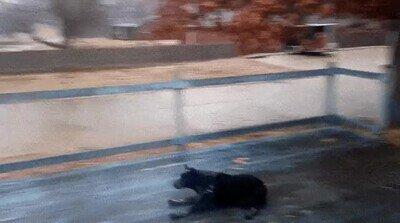 Enlace a Un perro que ha aprendido a resbalar para ser más molón
