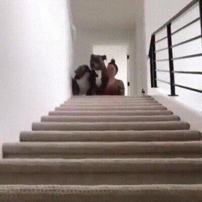 Enlace a Es adorable cómo mueve la cabeza mientras baja por las escaleras