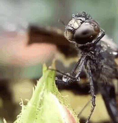 Enlace a Ojalá poder entender lo que está sintiendo esta mosca