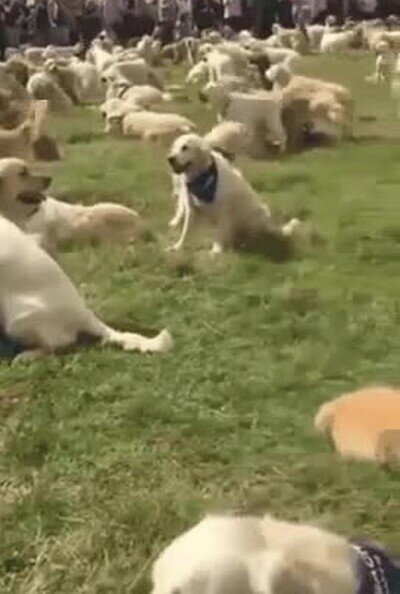 Enlace a El paraíso de los perros debe ser un lugar parecido a este
