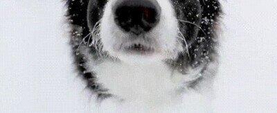 Enlace a Un perro alucinando con la nieve