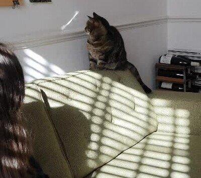 Enlace a Gatos que se distraen fácilmente