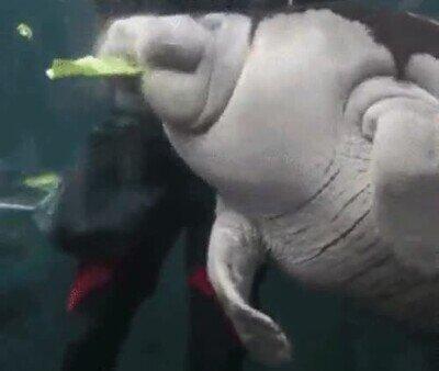 Enlace a Un devorador de comida bajo el agua