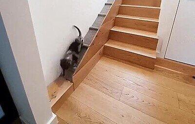 Enlace a Perro que merecen una rampa personalizada en las escaleras de casa