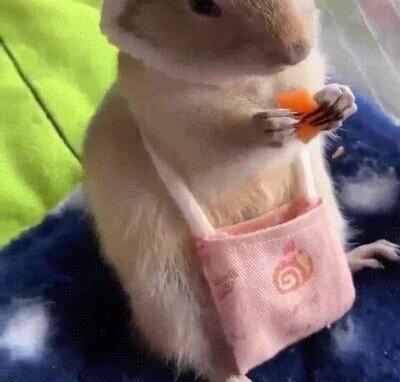 Enlace a Lo más adorable que verás en todo el día