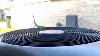 Enlace a Una lagartija que se ha sentido por un segundo como un astronauta