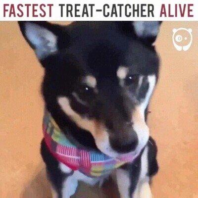 Enlace a Este perro atrapa su comida a una velocidad increíble