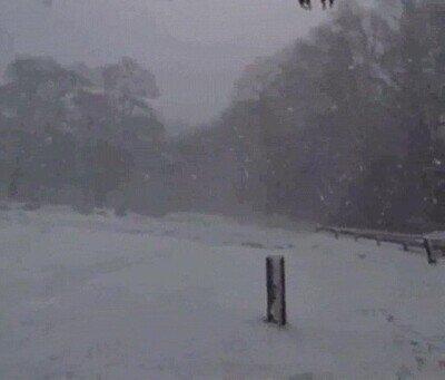 Enlace a Lo más majestuoso que puedes ver en una tormenta de nieve
