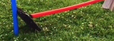 Enlace a Conejo volador al rescate