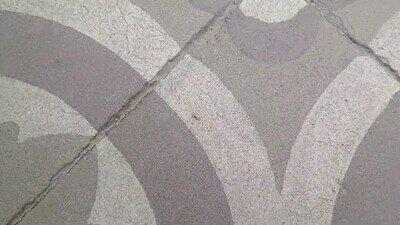 Enlace a Esta hormiga lleva horas andando en círculos