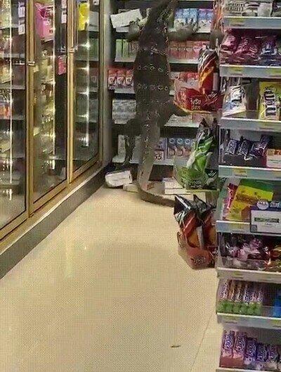 Enlace a Tailandia: pánico en un supermercado por un lagarto de 2 metros