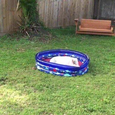 Enlace a Se acerca la temporada de la piscina en el jardín de casa