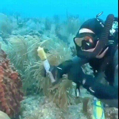 Enlace a El fondo del mar está repleto de cosas increíbles