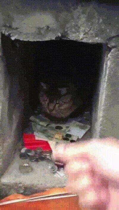 Enlace a Necesito un gato así en casa para poder llegar a fin de mes