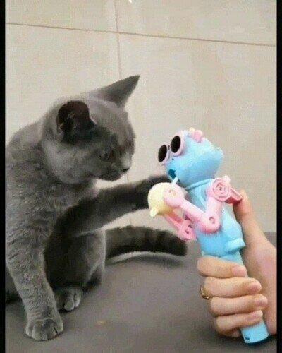 Enlace a Un gato que aprende el valor de compartir cosas