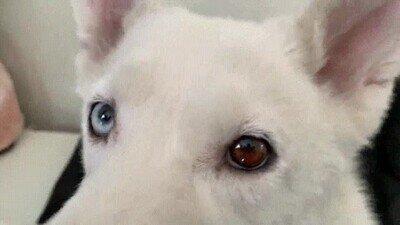 Enlace a Un perro y un gato con algo en común en los ojos