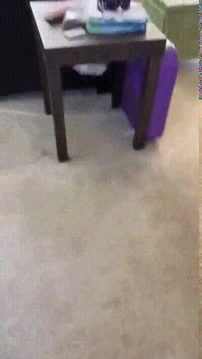 Enlace a ¿Qué le ha pasado a este gato?