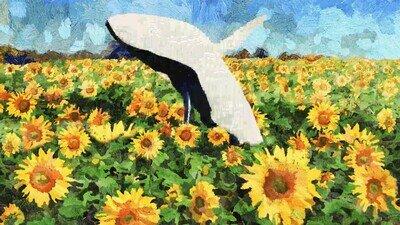 Enlace a No es lo que esperas cuando miras un campo de girasoles