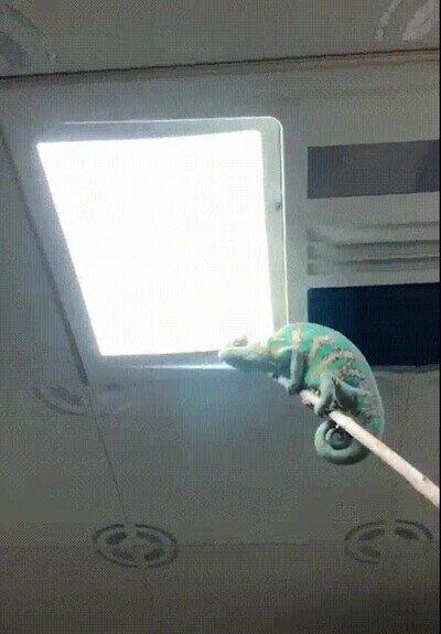 Enlace a Un camaleón que ayuda con esas molestas mocas del baño