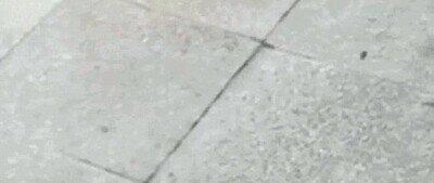 Enlace a Un perro jugando con una paloma