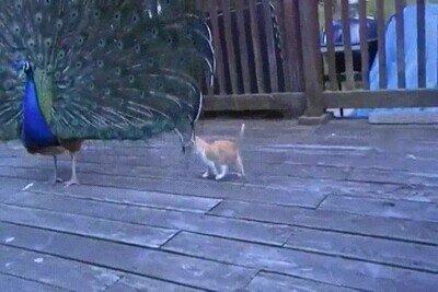 Enlace a Gatos que no se dejan intimidar por nada del mundo