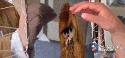 Enlace a La primera vez que lo miras parecen animales reales
