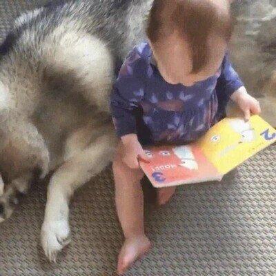 Mira perro, sales en este libro