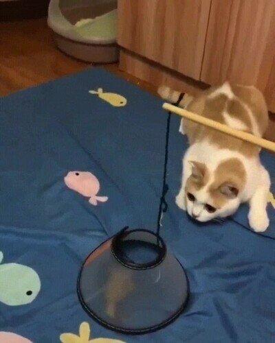 Enlace a El cono de la vergüenza, pobre gatito