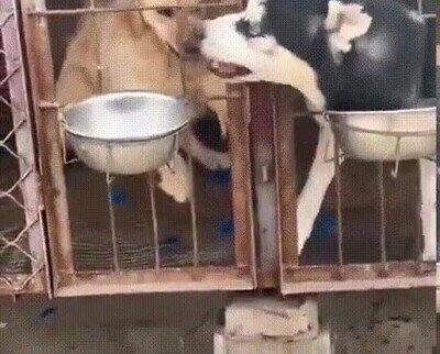 Enlace a En este mundo hay dos tipos de perros