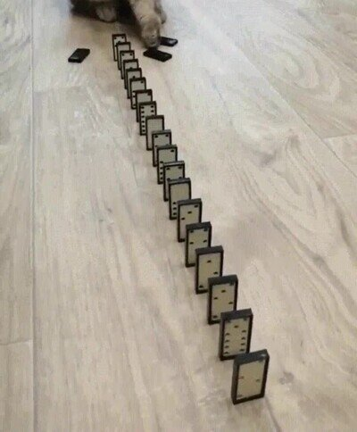 Enlace a Un gato aprendiendo a jugar con las piezas del domino