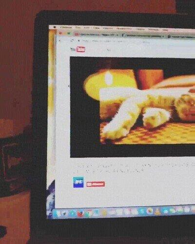 Enlace a En este mundo hay dos tipos de gatos