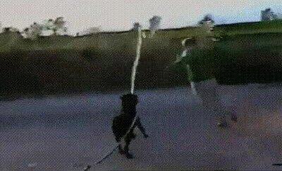 Enlace a Los perros nos están dominando poco a poco a todos