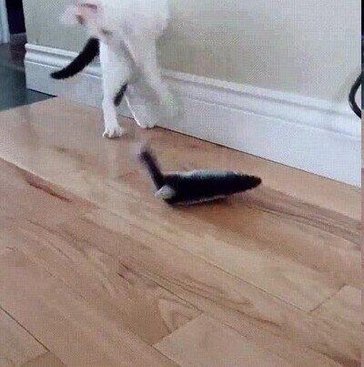 Enlace a Mi gato se vuelve loco con este juguete