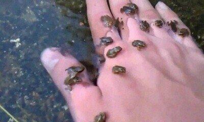 Enlace a En mi visita al río he encontrado a unos cuantos amigos