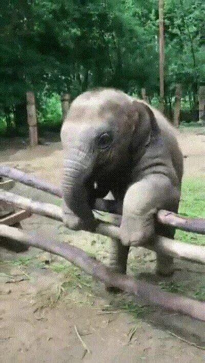 Enlace a Los bebé elefante son lo mejor del mundo