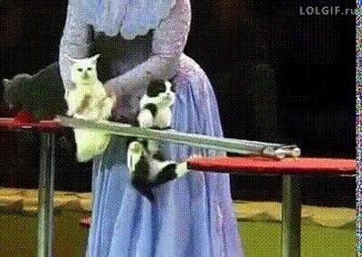 Enlace a Carreras de gatos haciendo obstáculos