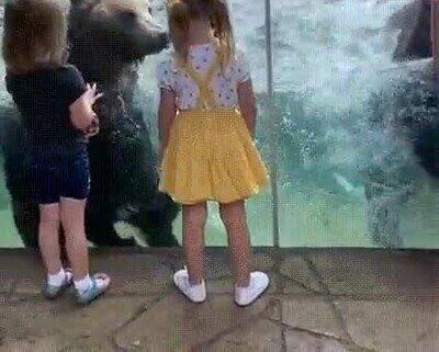 Enlace a Los osos también se lo pasan bien en la piscina