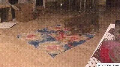 Un gato simplemente siendo un gato