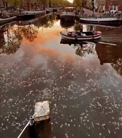 Enlace a Uno de los paisajes más bellos de Amsterdam